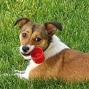 DogChewing